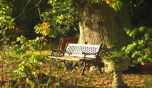 a seat under the oaktree